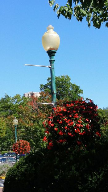 Flower Clear Sky Plant Fragility Beauty In Nature Blue FreshnessNature Sky Outdoors Tall - High Tranquility Lighting Equipment Green Color Red Blue Sky Light Botany Lamp Post Multi Colored Scenics In Bloom Indiana University Indiana