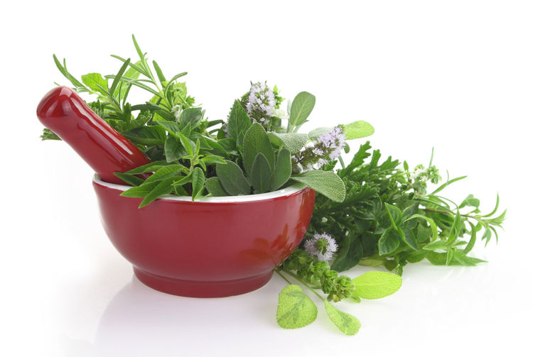 Close-up Coriander Cut Out Flower Pot Food Food And Drink Freshness Green Color Growth Healthy Eating Herb Houseplant Indoors  Leaf Mint Leaf - Culinary Nature No People Plant Plant Part Potted Plant Studio Shot Vegetable Wellbeing White Background