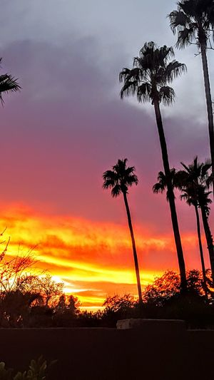 Mybackyard Beautiful Nature February 2016 Arizona Sunset #sun #clouds #skylovers #sky #nature #beautifulinnature #naturalbeauty #photography #landscape LATEnightPost Every Picture Tells A Story Elegance Everywhere