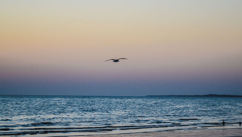 As the sun goes down.. Beauty In Nature Bird Flying Scenics Sea Sea And Sky Seagulls Seascape Silhouette Sky Sunset