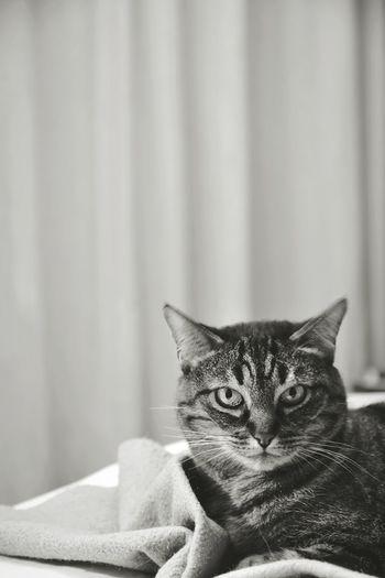 Cat nap Cat