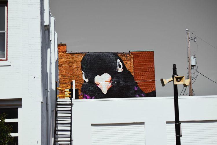 Mural Pigeon
