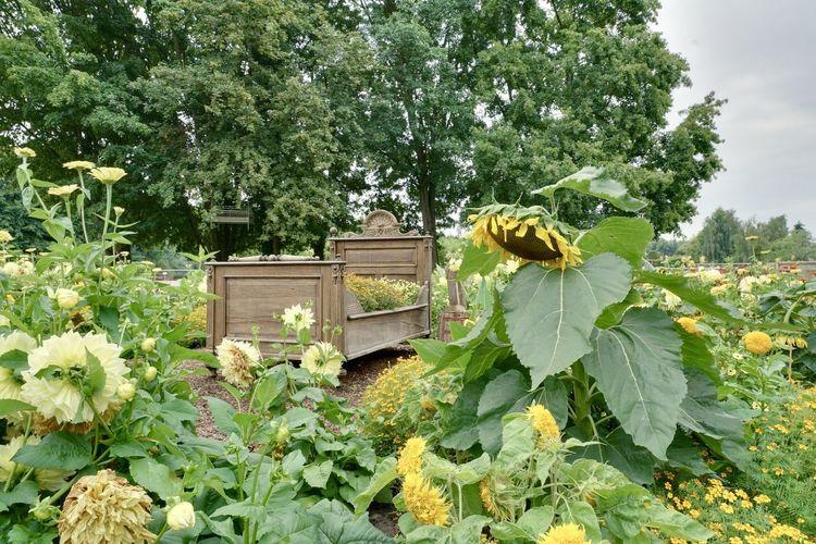 Bee on flowering plant against trees