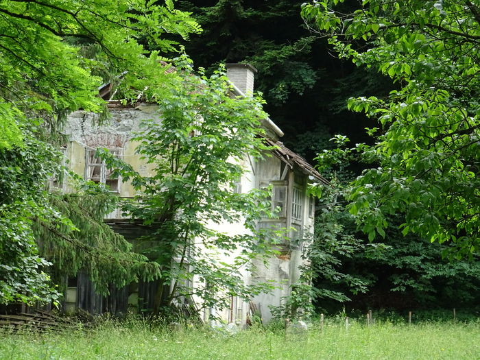 Plant Architecture Built Structure Building Growth Tree Green Color Building Exterior Nature Day No People Outdoors House Garden Foliage Abandoned Front Or Back Yard Ivy Grass Lush Foliage Cottage