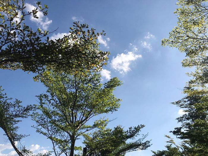 Low angle view of trees against sky on sunny day