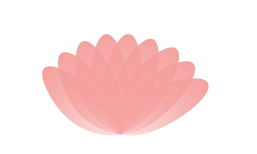 OFF LOTUS LOGO Pink Color Lotus Leaf Pink Lotus Lotus Leaves Lotus Art White Background Lotus First Eyeem Photo