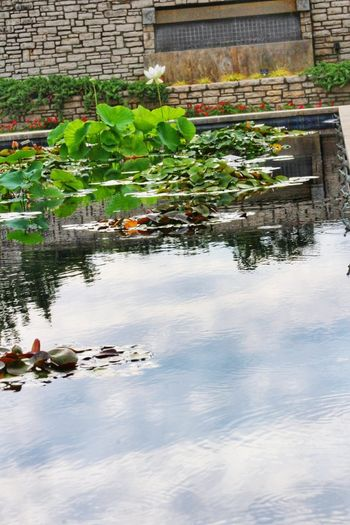Water Floating On Water Outdoors Day Plant No People Nature Architecture Flower Lotus Water Lily Lotus Pond Eyeemphotography EyeEmNewHere My Hobby 😁 Canonphotography Camera Life Is My Life! Sky Reflection