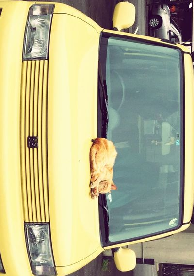 EyeEmNewHere Japanese Naoto Sawaki cat and car