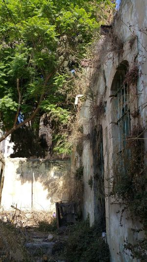 House of memories Abandoned Abandoned House Architecture Early 20th Century No People Palestinian Architecture Plant Tulkarm