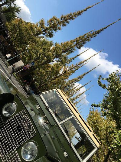 まだまだ都内は紅葉は進んでないですね🍁 神宮の銀杏並木の見頃は、まだまだ先の様ですね。 Ginkgo Blue Sky Clouds And Sky Blue & Green Land Rover LAND ROVER SERIES 2 Hello World The Purist (no Edit, No Filter) Historic Car Vintage Cars Classic Car British Car Tokyo Days