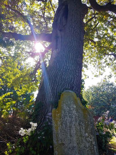 Old Unmarked Grave Tree Sunlight Nature Outdoor Photography Spooky Cemetery Old 17th Century Creepy Sunbeam Art Is Everywhere