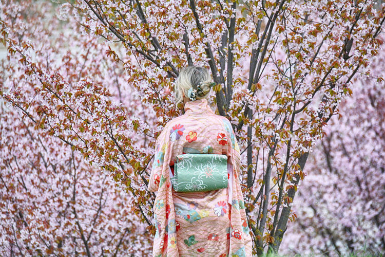 Rear view of woman on cherry blossom tree