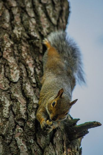 Close-up of squirrel on tree trunk