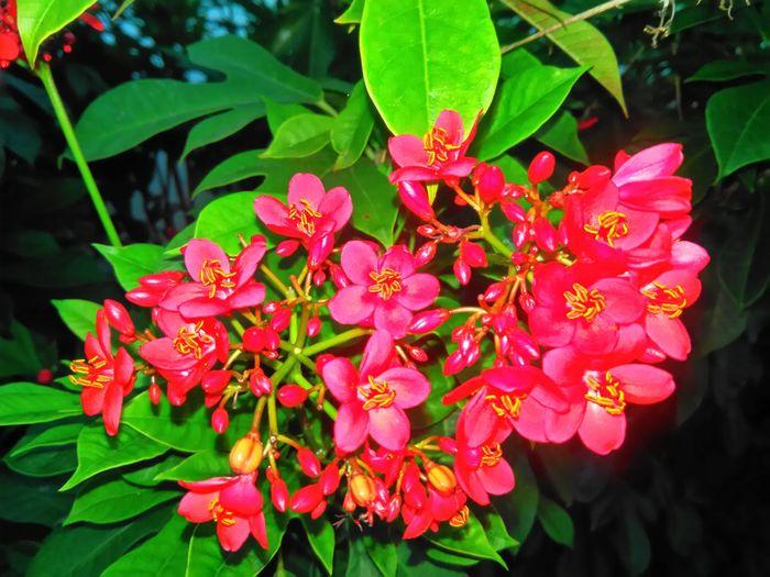 ดอกไม้ยามเช้า Flower First Eyeem Photo