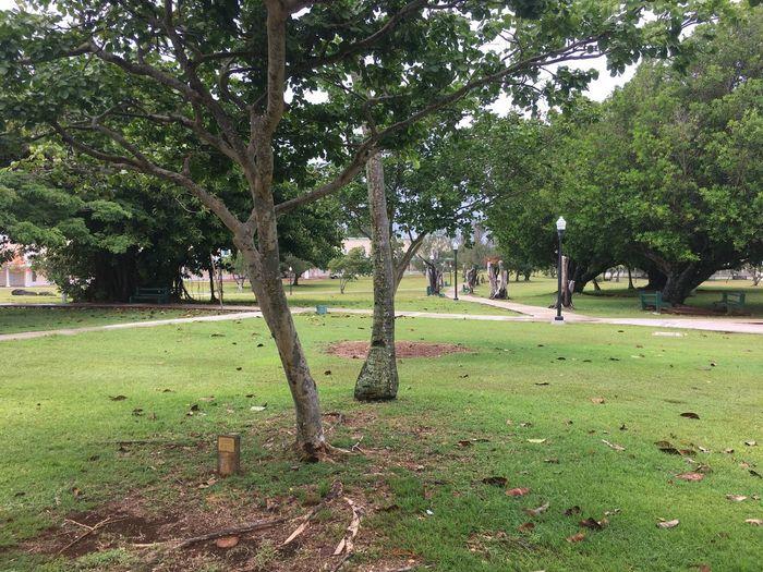 Summer on Campus post rain 2