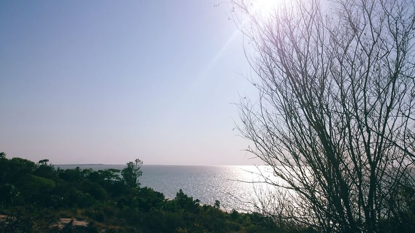 Over the horizons Calm Water Calm Seas Sea And Sky Seascape Sea View Sea_collection Landscape Naturelovers Nature_collection Nature Photography Beauty In Nature Nature Sky Scenics Tree Day Sea Water Water Sea Nature Sky Tree Mindless Walk EyeEm Nature Lover