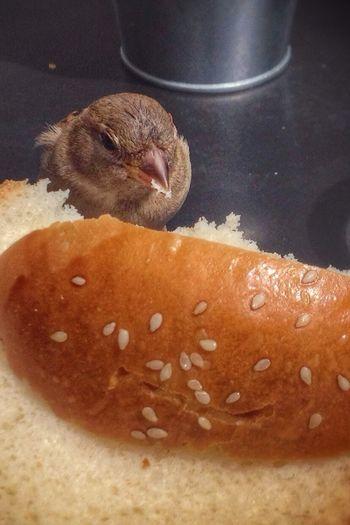 But who stole my lunch??? Bonjour Paris