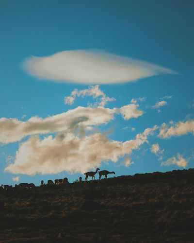 Animal Themes Beauty In Nature Blue Cloud - Sky Day Landscape Mammal Nature No People Outdoors Scenics Sky