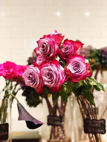 All staring at you Flower Rose - Flower Fragility Nature No People Petal Beauty In Nature Freshness Flower Head Pink Color Bouquet Plant Focus On Foreground Close-up Day Indoors