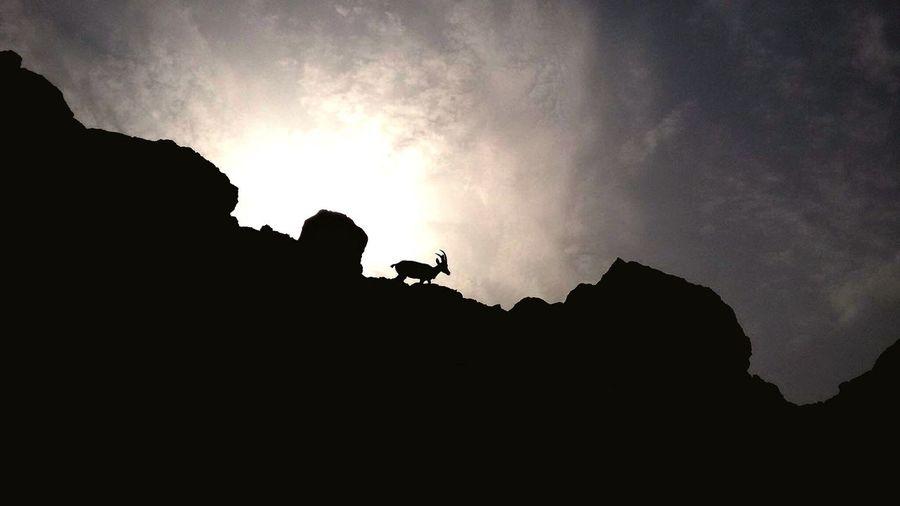 Lonely Tiger | En Gedi Nubian Ibex En Gedi Israel Judean Desert National Park An Eye For Travel