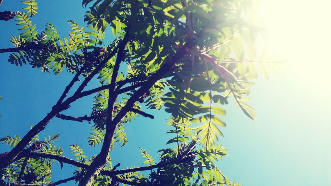 Branches Foliage Sky Nature_collection EyeEm Nature Lover Secret Garden Creative Light And Shadow