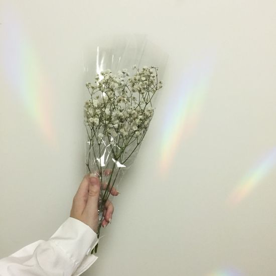 Baby's breath Babys Breath Human Hand Human Body Part One Person Holding Real People Studio Shot Indoors  White Background first eyeem photo