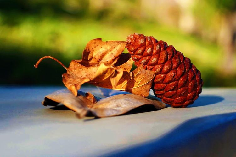 California Close-up Colors Day Fall Leaf Leaves Macro Macro Photography Maximum Closeness Moorpark Natural Nature Nature Photography Nature_collection No People Out Outdoor Photography Outdoors Outside Photo Photography Pine Cone Shadow Sharp