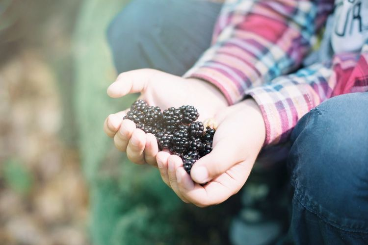 Midsection of boy holding blackberries