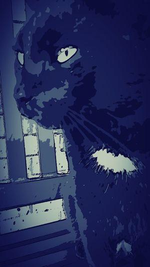 Cats Black Cats Cat Lovers Eyeem Cat Portraits