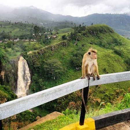 I call this Snapshot ---> Monkeybusiness  . The look on his face makes it clear that this Monkey does mean Business . He ain't Monkeyingaround for nothing. Fromthearchives LongTimeAgo  When I was Ontheroad ; saw this one Enjoying the Lush Scenery , the Hills & the Waterfall . Candid Nofilter Noedit Naturalshot Indianphotographersclub Indiatravelgram Amateurphotography Camerateur Ig_indiashots Odi_igers Ig_odisha