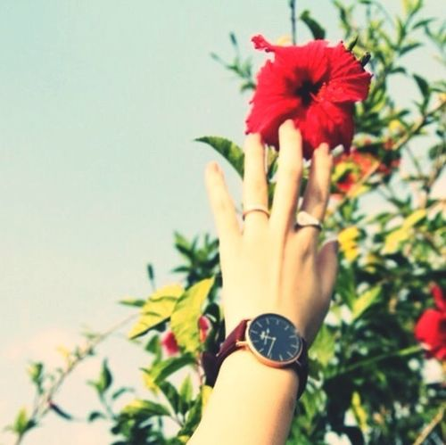 Reach flower, reach sky and you.... Enjoying Life Selfie Watch Street Fashion