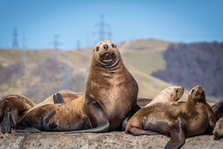 Animal Wildlife Mammal Animal Themes Group Of Animals Animals In The Wild Aquatic Mammal Seal - Animal Sea Underwater Animal Sea Lion Relaxation Nature Focus On Foreground Day Land No People Rock Water Solid Marine Outdoors Animal Family