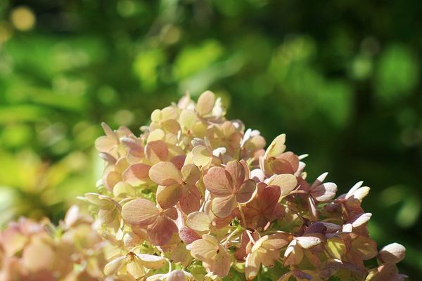 Nature No People Green Color Beauty In Nature Outdoors Flower Vintage Lenses Nature Beauty In Nature Helios44 Beauty Day Flowers Flower Collection Helios Vintage Lens On Modern Camera Vintage Lens Close-up Hodmezovasarhely EyeEmNewHere