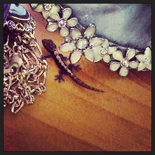 Little baby gecko I found hangn out on the dresser this afternoon Lizard Baby Gecko Babygecko bugeater littledude cameonecklace pictureframe hawaii jewelry victoriancameo