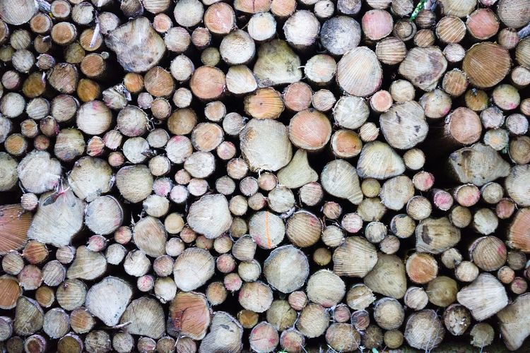 Pattern Pieces Wood Backgrounds Background Nature Round Shapes Brown Wooden Texture Structure Many Variation Full Frame Things Organized Neatly Everything In Its Place Color Palette