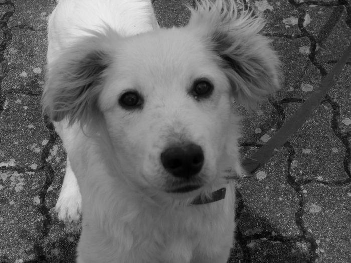#basilicata #vialedel Basento #bestfrind #bianconero #blackandwhite #dog #potenza #fotobiancoenero #OldPicture #spettacolo