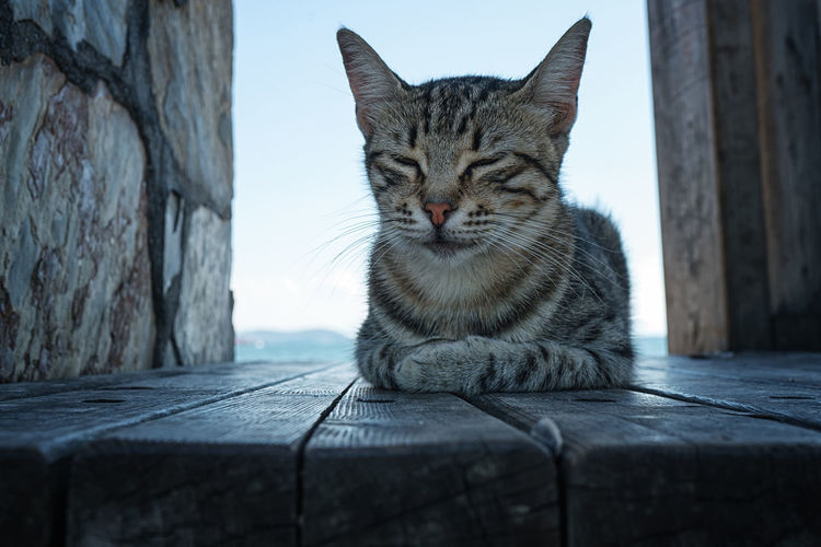 Portrait of tabby cat sitting on wood