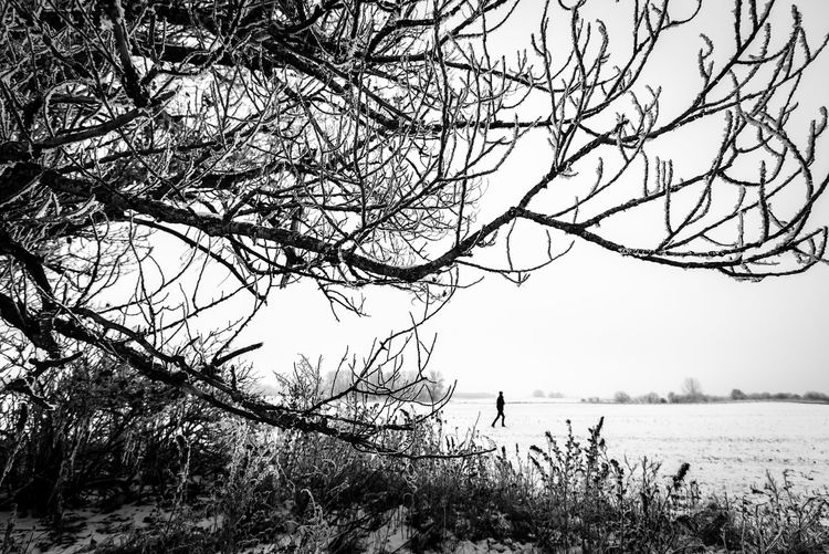 Environment Field Growth Lifestyles Real People Non-urban Scene One Person Tranquil Scene Scenics - Nature Day Bare Tree Tranquility Sky Branch Outdoors Nature Beauty In Nature Plant Land Tree Blackandwhite Black And White Monochrome