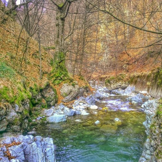 Nature River Montainriver EyeEm Nature Lover Forestriver Nature Photography