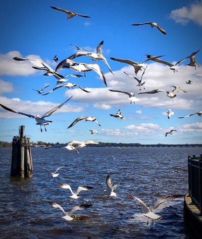 Beautiful Day Birds In Flight Eyem Nature Lovers  Birds Waterfront Flying Bird Animals In The Wild Flock Of Birds Sea Animal Themes No People Cloud - Sky Water Mid-air Nature Beauty In Nature Sky Sea Bird Seagull