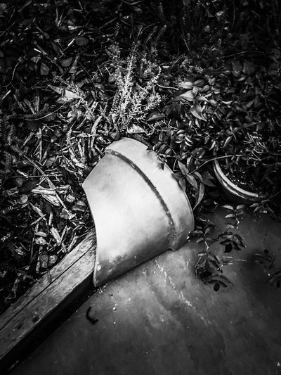 Abandoned No People Day Outdoors Nature Water Close-up Photograph Building Exterior Potted Plant Pot Garden