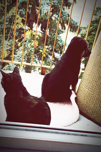 #cat #dog Animal Themes One Animal Animal Pets Mammal Domestic Domestic Animals Dog Canine Nature No People