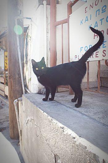 Cat Cyprus Black Cat