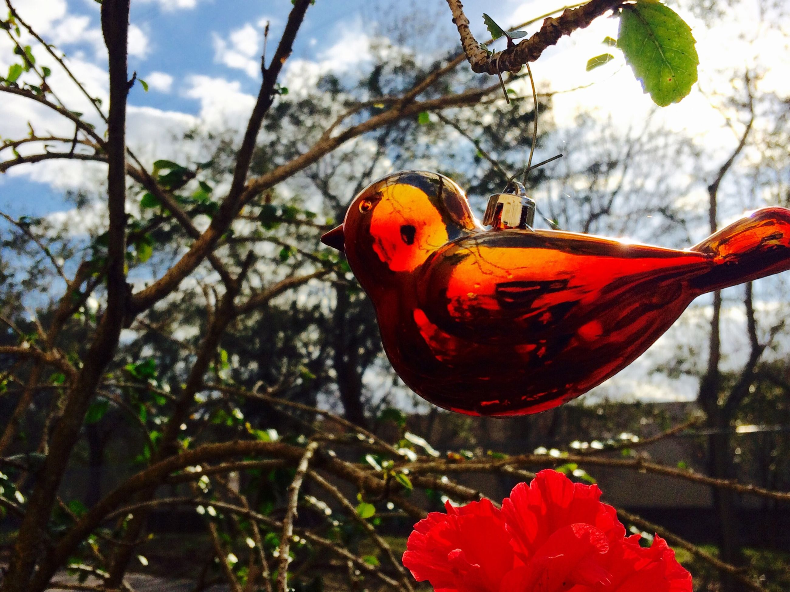 focus on foreground, flower, red, close-up, plant, growth, nature, branch, tree, beauty in nature, fragility, day, freshness, orange color, outdoors, no people, leaf, one animal, stem, animals in the wild