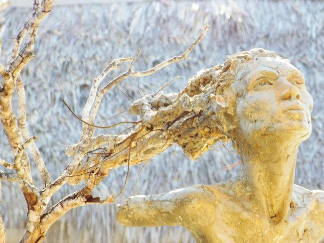 Cuba. 4. Sculpture Exhibition Art Piece Cuba Boat Detailed To Perfection Nature Trees Human Meets Nature Cuba Melia Las Dunas