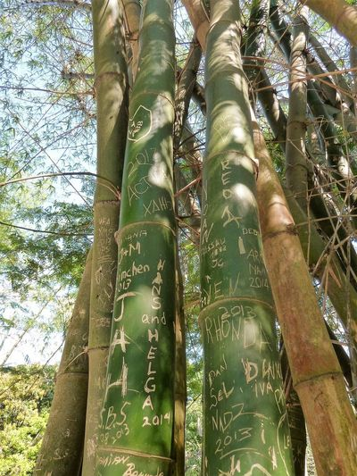 Bamboo - Plant Close-up Communication Day Growth Low Angle View Low Section Nature One Person Outdoors People Sky Text Tree Tree Trunk