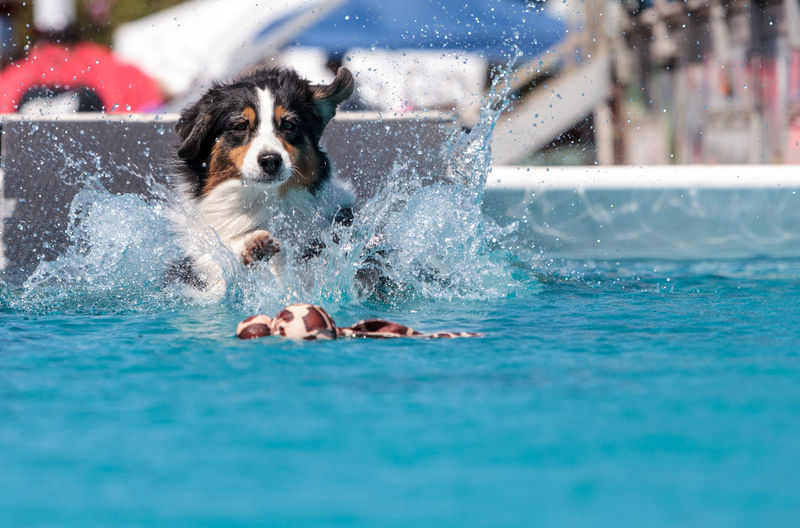 Portrait of puppy in water at swimming pool