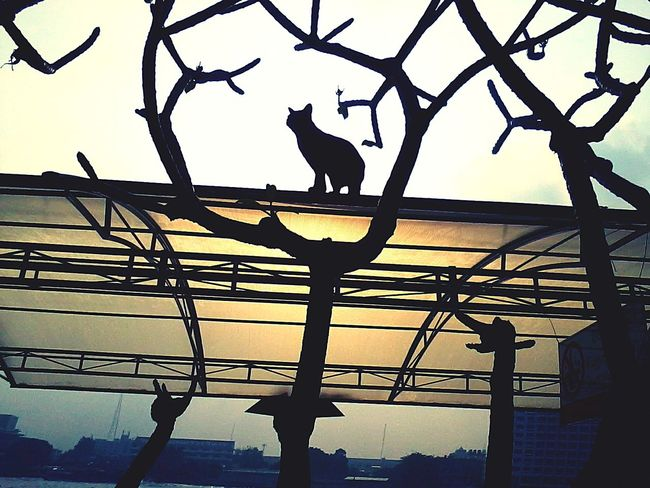 Cat,Cat see the Sun, Hello World , Getting In Touch , Taking Photos , Relaxing EyeEm Thailand