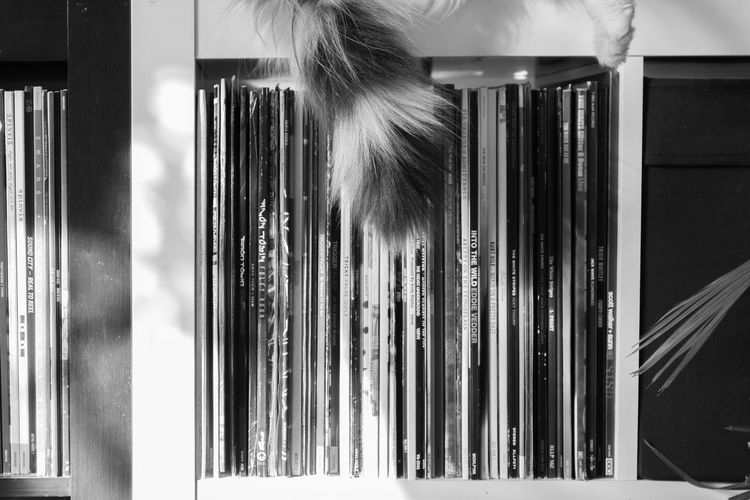 Close-up of cat tail against records in shelf
