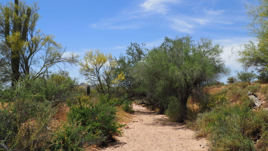 Dirt road amidst plants and trees against sky